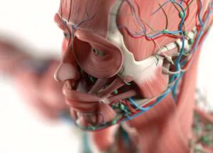 Skin Deep Anatomy injectable training voor cosmetisch artsen