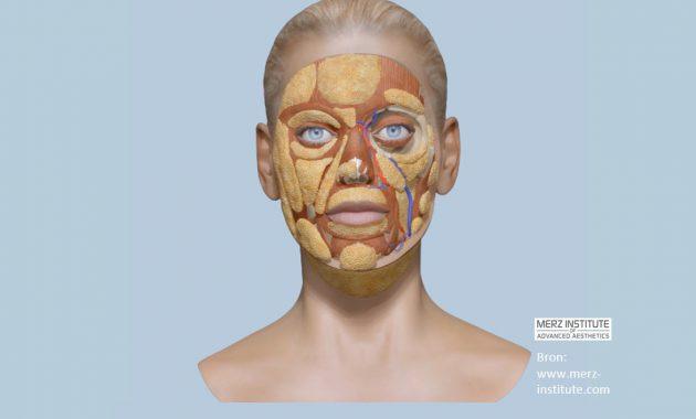 Skin Deep Anatomy: Injectable hands-on training voor cosmetisch artsen | Opleiding cosmetisch artsen